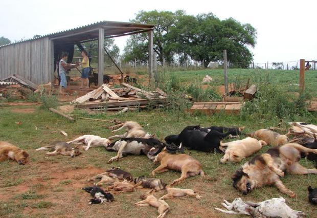 Polícia investiga morte de 37 cães em abrigo em São Francisco de Assis Jeremias Izaguirre de Oliveira/Leitor-Repórter