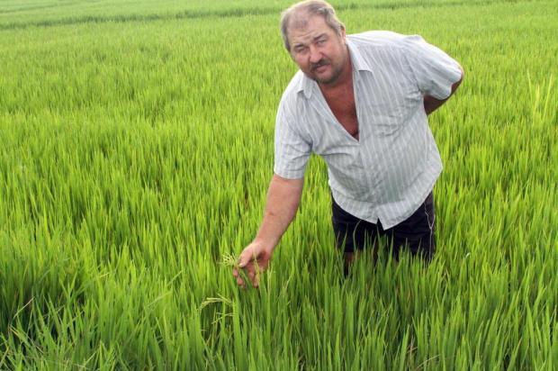 Chuva dos últimos dias dá novo fôlego a arrozeiros Francisco Bosco/Especial