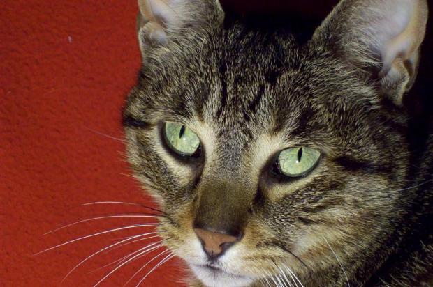 Assim como os cães, os gatos podem ter sua personalidade adestrada Stock Photos/Stock Photos