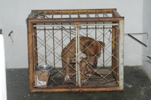 Comissão da Câmara adia votação de projeto de lei que proíbe reprodução de pitbulls e rottweilers Marcos Porto/Agencia RBS