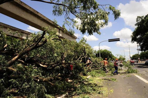 Prefeitura inicia remoção de cem árvores para duplicação da Avenida Edvaldo Pereira Paiva, em Porto Alegre Emílio Pedroso/Agencia RBS