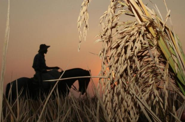 Federarroz pede audiência com ministro da Agricultura Nauro Júnior/Agencia RBS