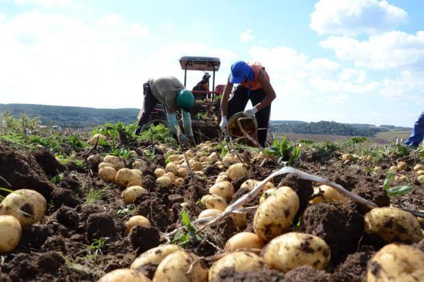 Depois do tomate, preço da batata-inglesa deve registrar alta para o consumidor Rafael Cavalli/Especial