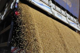 Safra de verão marca retomada de investimentos para agricultores da região central do Estado Ronald Mendes/Agencia RBS