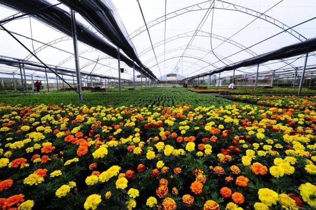 Mercado das flores: Pareci Novo é uma cidade com jeito de jardim Ricardo Duarte/Agencia RBS