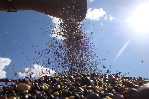 Governo estimula o cultivo do feijão e tenta reduzir preço ao consumidor Roberto Witter/Agencia RBS