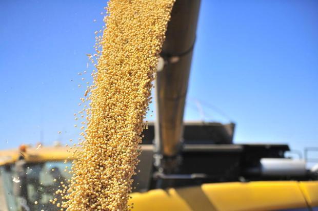 Monsanto anuncia o lançamento comercial de sua nova soja transgênica  Tadeu Vilani/Agencia RBS