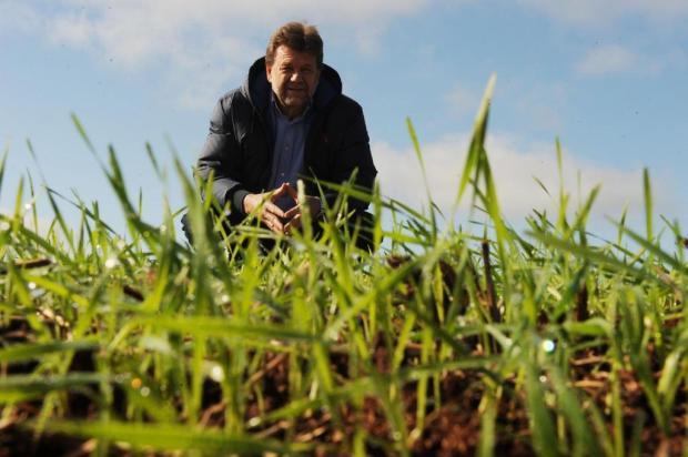 Baixa oferta deve garantir preço 15% superior ao trigo nesta safra Diogo Zanatta/Especial