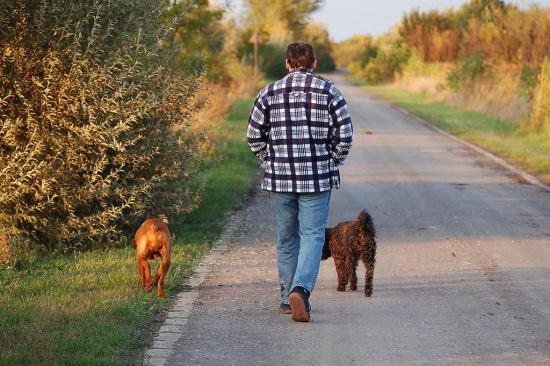 Interação com cachorros pode ajudar pessoas com demência Dora Horvath/stock.xchng