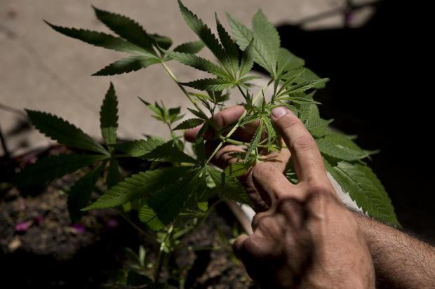 Deputados aprovam a legalização da maconha no Uruguai Pablo PORCIUNCULA/AFP FILES