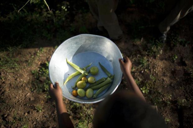 Enquanto o custo de importação de alimentos aumenta, a Jamaica se vale da terra Andrea Bruce/NYTNS