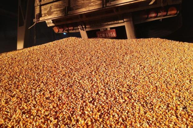 Com atrasos em Paranaguá, porto de Rio Grande escoa safra de milho de outros Estados William Gonçalves/Especial