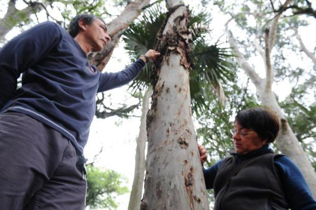 Engenheiros agrônomos analisam estado de árvores da Redenção, em Porto Alegre Fernando Gomes/Agencia RBS