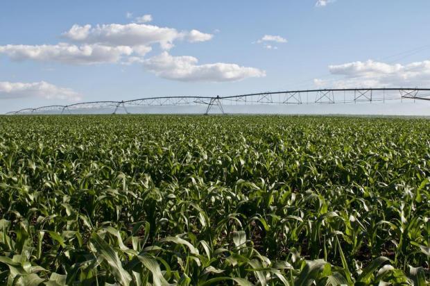 Com aprovação de projeto na Assembleia Legislativa, governo quer dobrar área irrigada no Estado Tiago Francisco/divulgação