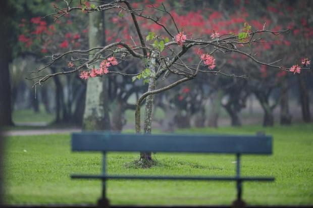 Cinco coisas que você deve saber sobre a primavera que começa neste domingo Mauro Vieira/Agencia RBS