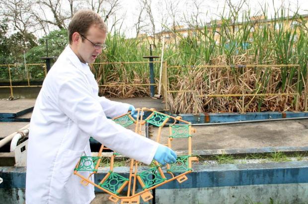 Novo Hamburgo testa tecnologia para tratamento de esgoto que utiliza plantas e pode reduzir custos Charles Dias/Especial