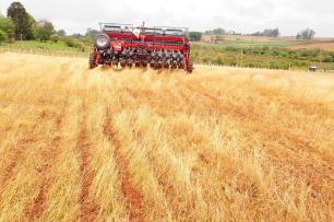 Área cultivada com soja deve crescer 6% no Rio Grande do Sul nesta safra Claudio Vaz/Agencia RBS