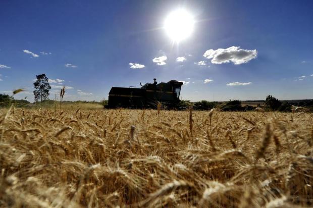 Governo anuncia proposta de redução do ICMS para o trigo Carlos Macedo/Agencia RBS