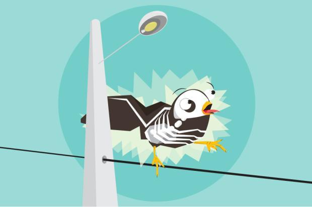 Por que os passarinhos não tomam choque quando pousam em fios de luz? Henrique Tramontina/Arte ZH