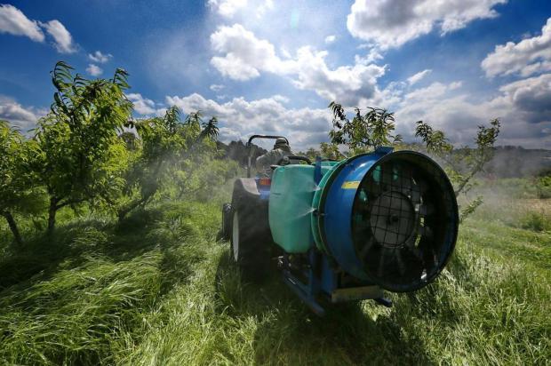 Uso de agrotóxicos no Rio Grande do Sul chega a quase o dobro da média nacional Ricardo Duarte/Agencia RBS