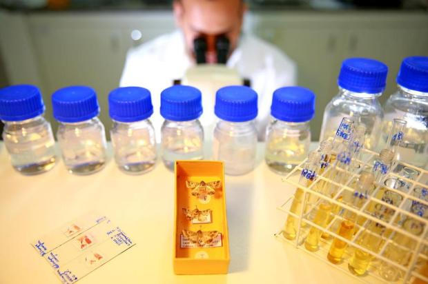 Entenda como ocorre a identificação em laboratório da praga que ataca as lavouras de soja Diego Vara/Agencia RBS