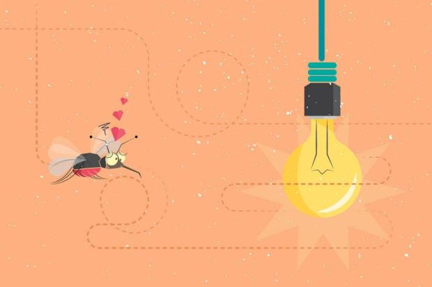 Por que os mosquitos ficam voando ao redor da luz? Eles são atraídos? Henrique Tramontina/Arte ZH