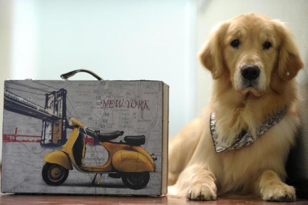 Governo já está emitindo passaporte para cães e gatos  Juan Barbosa/Agencia RBS