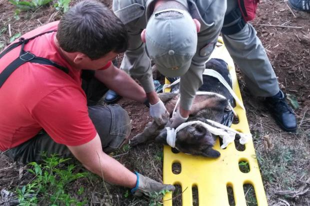 Bombeiros socorrem cadela enterrada viva em Vera Cruz Corpo de Bombeiros Vera Cruz/Divulgação