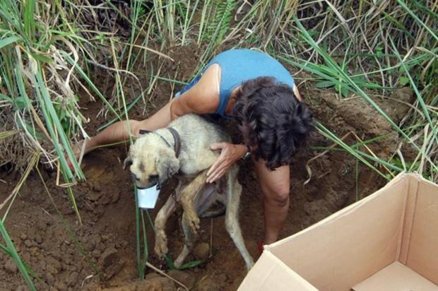 Morre cão que foi resgatado em uma cova, em São Paulo Márcia Colla/Arquivo Pessoal