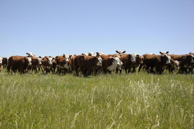 Criadores de gado de corte melhoram resultados ao utilizar pecuária de precisão tiago francisco/Sistema Farsul,divulgação